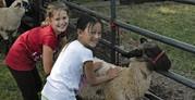 Kids with sheep at frying pan park