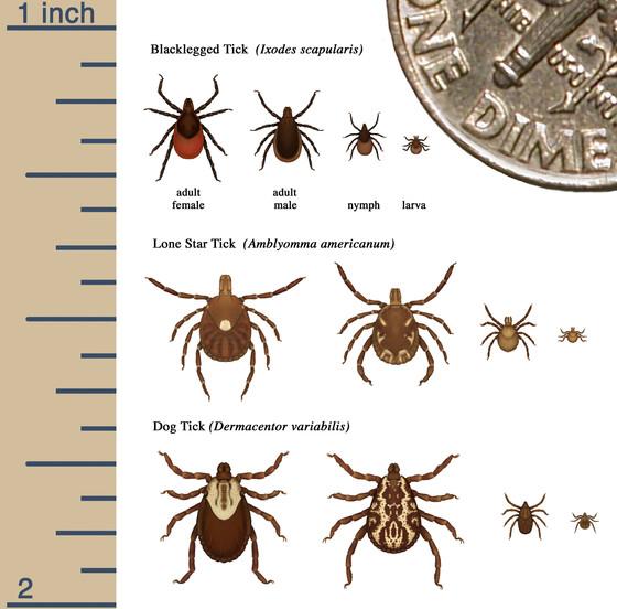 ID Ticks