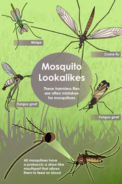 Tips for Recognizing and Preventing Mosquito Activity