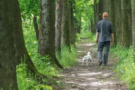Dog on Leash - Trail