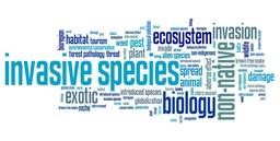 Invasive Species - word cloud