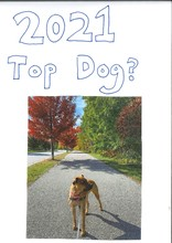 Top Dog 2021 - card front
