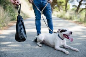 April Stools - poop bag with dog