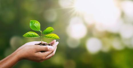 Climate - leaf