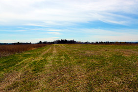 Open field at Hubbard Recreation and Natural Area