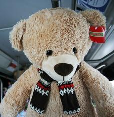 Teddy Bear on a Bus
