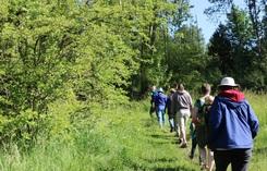 WSCP Walks