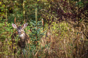 Deer at MMP