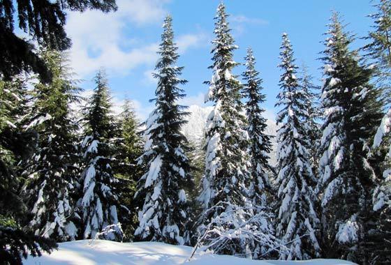 UA Snowy
