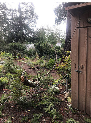 yard waste from storm damage