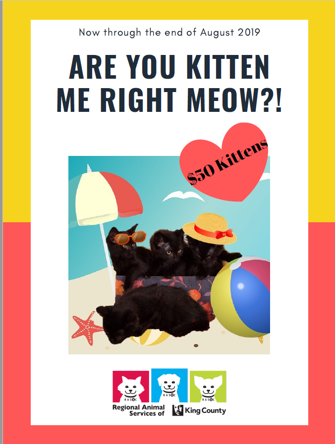 kitten special