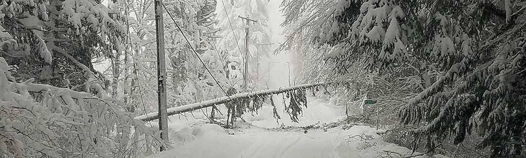 downed tree on power line over snowy road