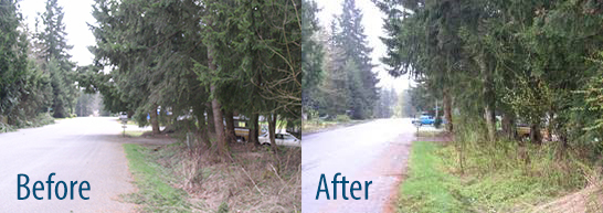 Before and after photos - tree trimming