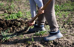 Tips for designing a sustainable landscape and building healthy soil