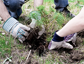 Register for class:selecting local plants for functionality and wildlife
