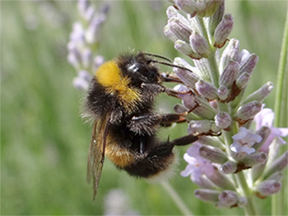 Register for class: Creating habitat for beneficial animals and insects
