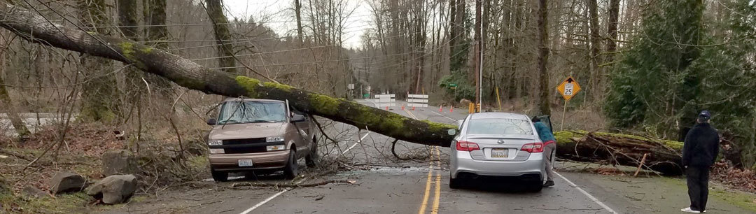 downed tree across two vehicles