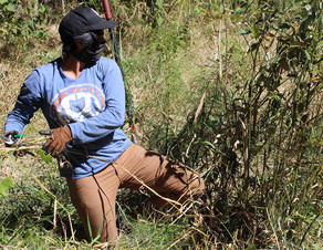 Photo: woman battling weeds
