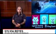 Syvia Univision