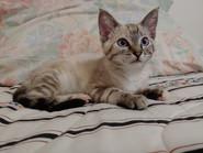 kitten Milkshake