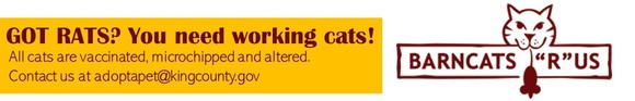Barn Cat updated