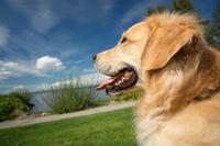 Off-Leash Dog Survey