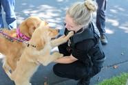 dog at pet-a-oalooza