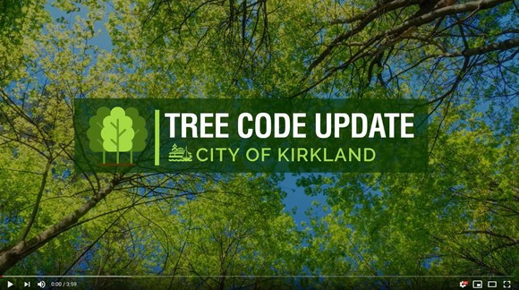tree code update video cover