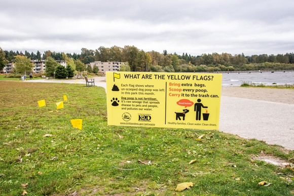 Yellow flag marking dog peach near Juanita Beach shoreline