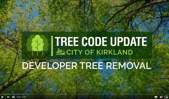 tree code update, city of kirkland, developer tree removal, background tree