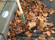 Rake and Leaf
