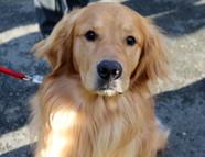Mayor's dog
