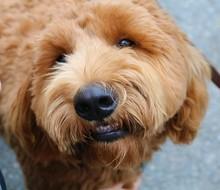 Pet grooming image