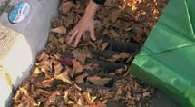 Leaves image for leaf removal