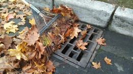 Storm water leaves in storm drain pic