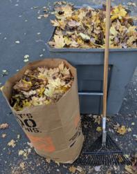 Free yard waste
