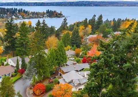 Tree survey aerial