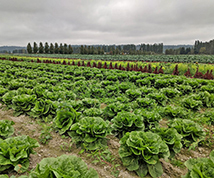 food waste - sound sustainable farms