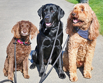 Leash and Scoop Reminders