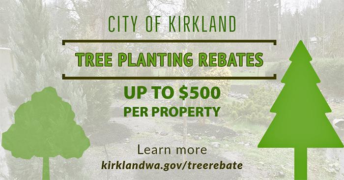 Tree Planting Rebates!