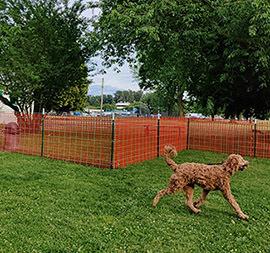 Pop Up Dog Parks