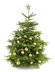 Christmas tree with gold decoration