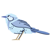 bird canva
