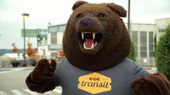 KT bear