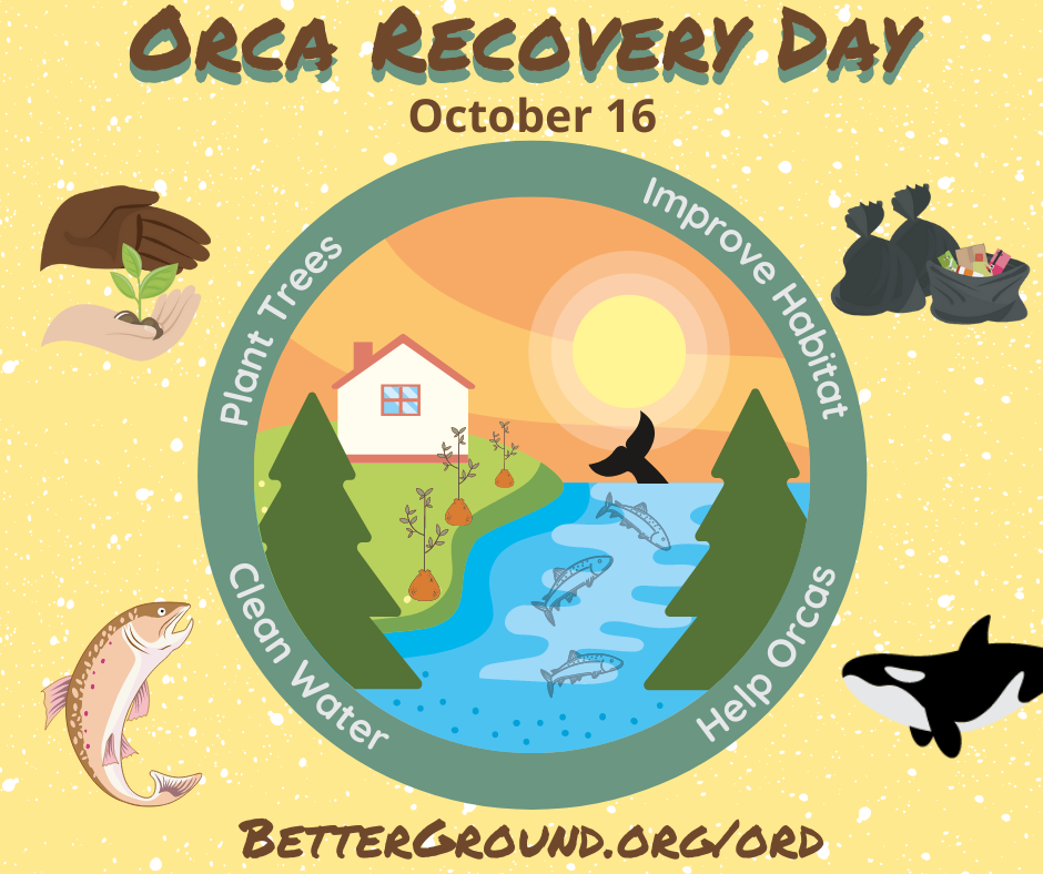 Orca Recovery Day 2021