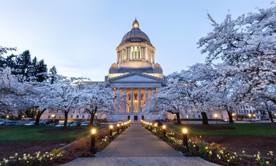Capitol dome and cherry trees