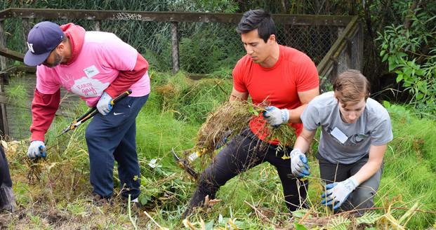 photo of people removing invasive plants