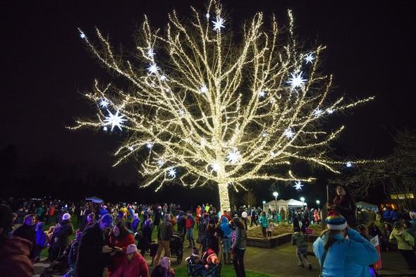 Redmond Lights Tree