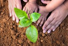 Parent and Child Gardening