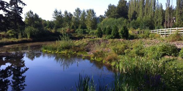 Stormwater pond in Redmond